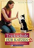 Trickschule für Katzen: Spaß mit Clicker und Köpfchen
