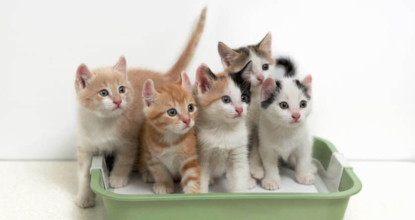 Katzen sitzen in Premiere Katzenstreu