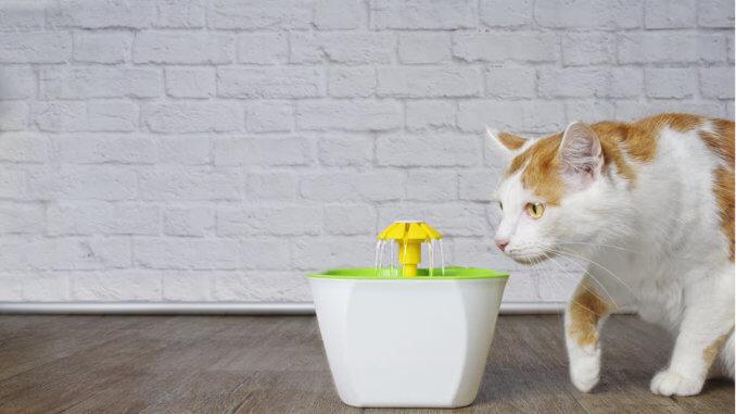 Katze trinkt am Katzenbrunnen