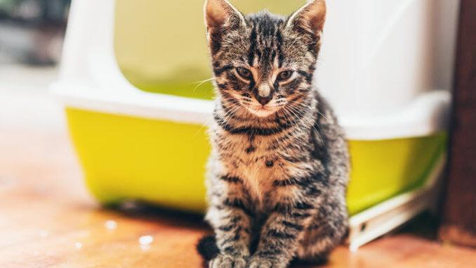 Ein Katzenklo mit Deckel