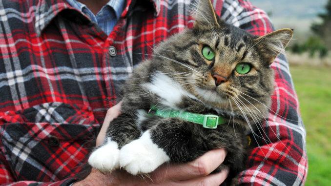 Katzensitter mit Katze auf dem Arm