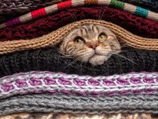 Katze friert und zittert in Wäsche