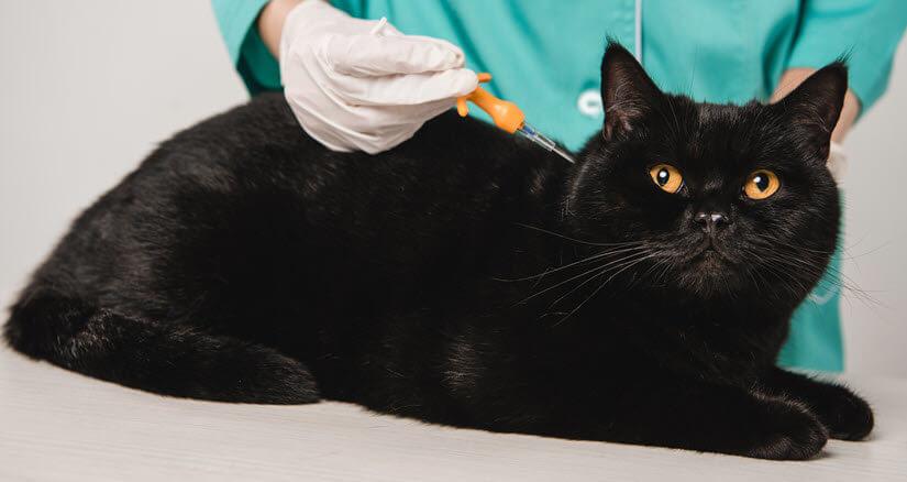 Eine Katze beim Tierarzt