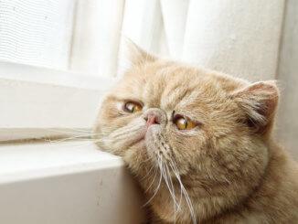 Einsame Katze am Fenster