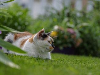 Katze im Garten hat Entwurmungsmittel bekommen