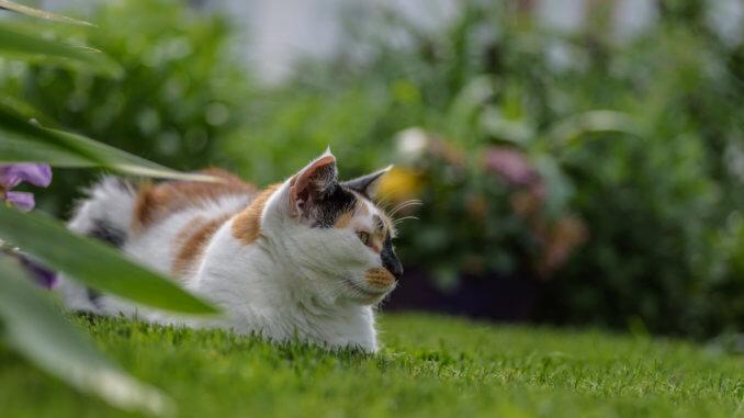 Wurmkur Bei Der Katze Katzenwelt Net