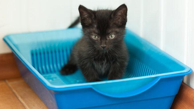 Kätzchen in Katzenklo ohne Thomas Katzenstreu