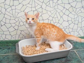 Junge Katze beim Klotraining