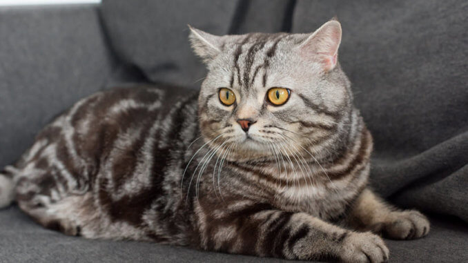 Katze pinkelt auf das Sofa