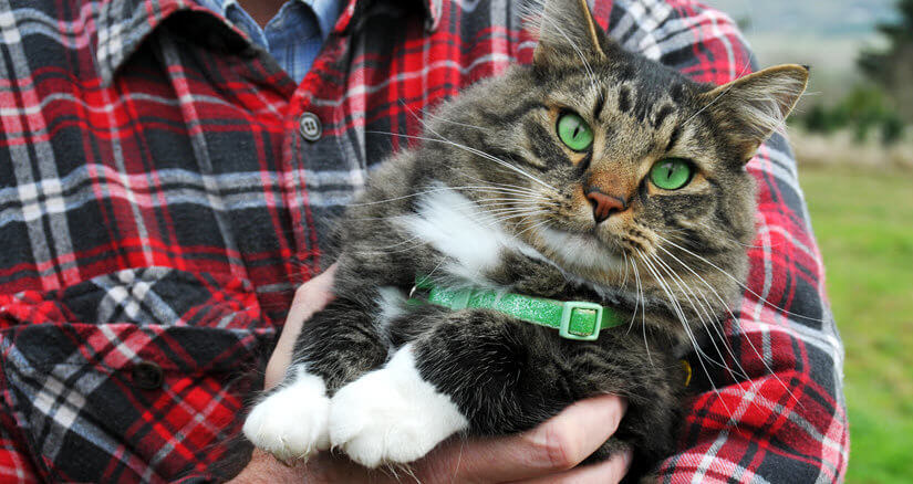 Katze mit GPS Halsband
