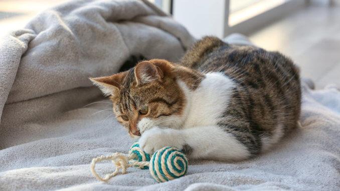 Katze spielt mit Fummelbrett und Ball
