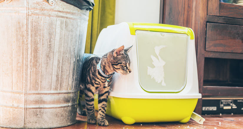 Katze neben elektrischem Katzenklo