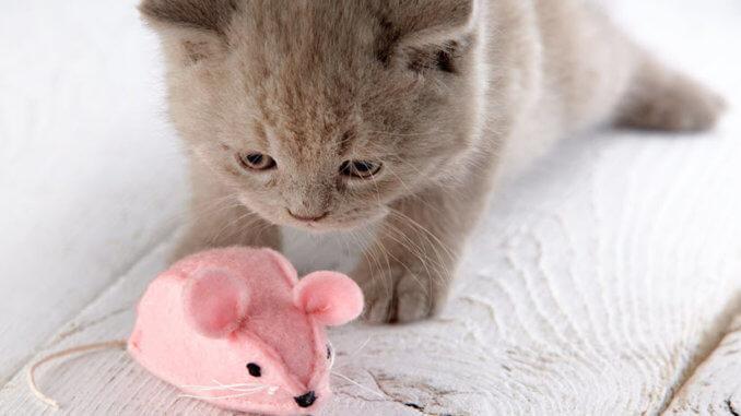 Katze spielt mit einem elektrischen Katzenspielzeug