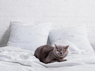 Katze pinkelt ins Bett
