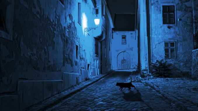 stromernde rollige Katze auf der Straße