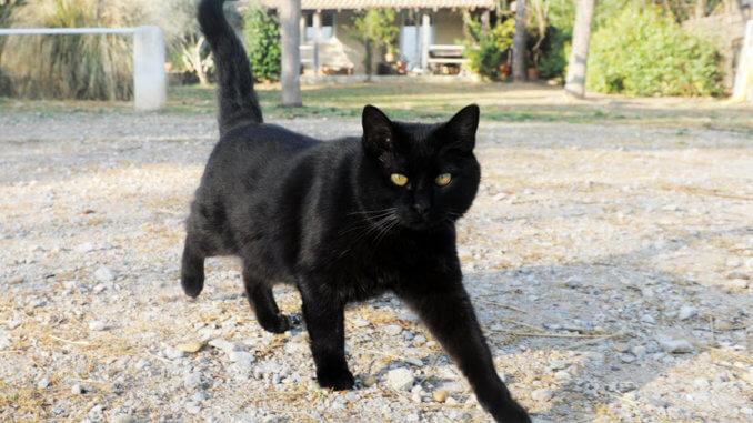 Streunende Katze hat Angst vor Katzenschreck