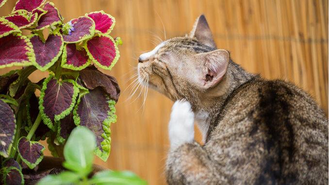 Katze kratzt sich ausführlich