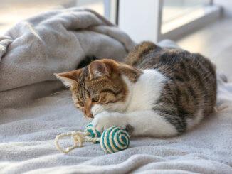 Katze spielt auf Bett