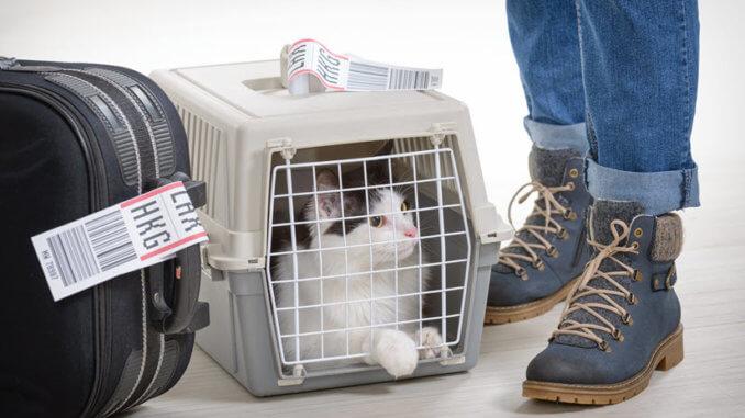 Koffer, Katzenbox und Mann vor der Reise