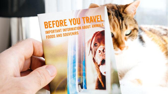 Heimtierausweis für die Katze
