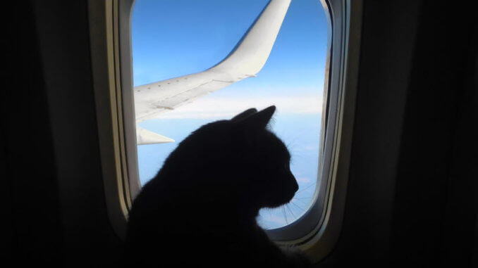 Katze im Flugzeug