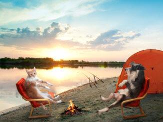Katze und Hund beim Camping