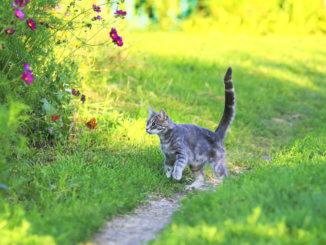 Katze mit Pollenallergie im Freien
