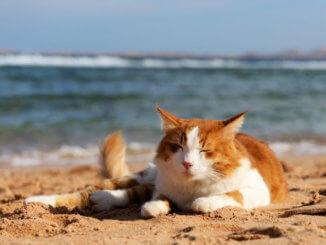 Mit der Katze in den Urlaub