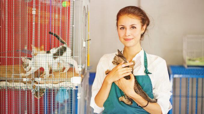 Tierheimmitarbeiterin mit Katze auf dem Arm