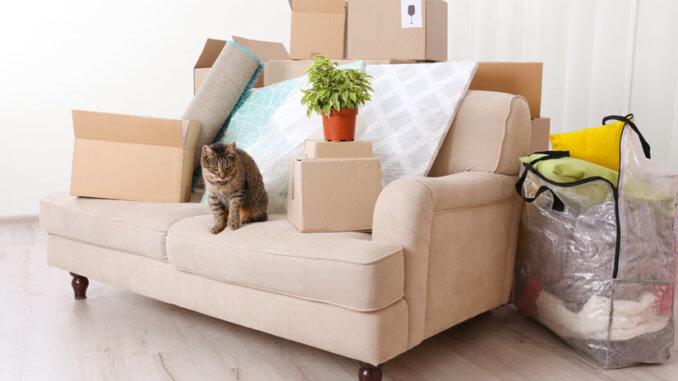 gepackter Hausrat für einen Umzug mit der Katze