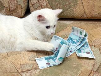 Katze mit Geld auf einer Couch