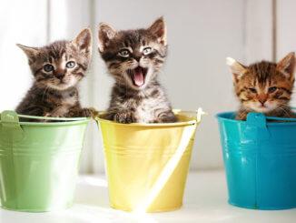 3 Kätzchen mit 3 Namen