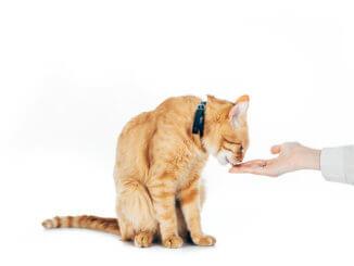 Katze bekommt Leckerli