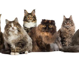 Sechs verschiedene Katzenrassen