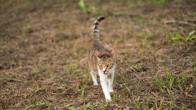Freigänger Katze draußen im Wald