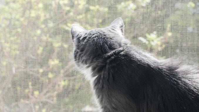 Graue Katze guckt durch ein Balkonnetz nach draußen