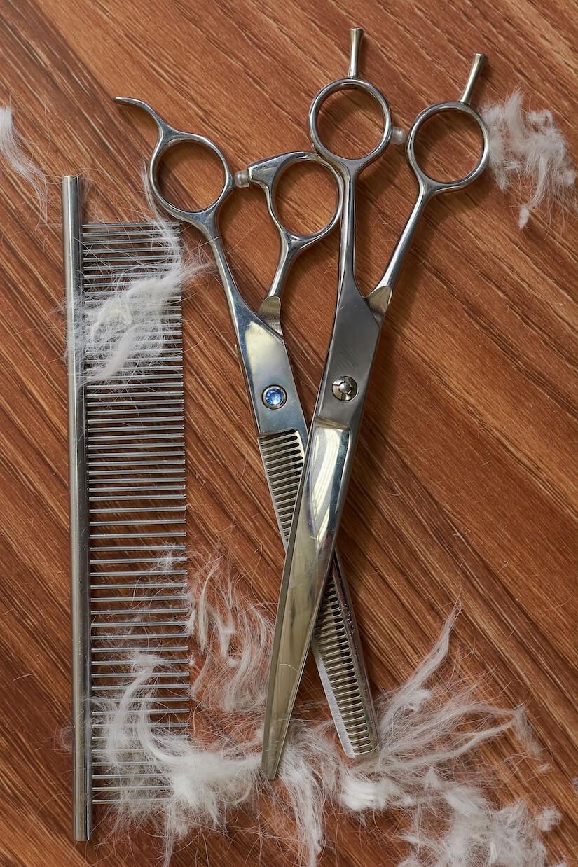 Haarschere zum frisieren der Katze