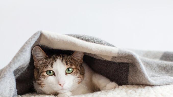 Hauskatze unter einer Deck auf ihrem Katzenkissen