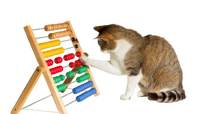 Intelligenzspielzeug für die Katze