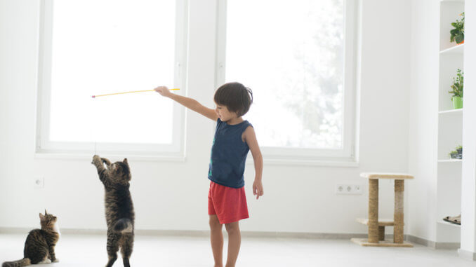 Junge spielt mit Katzen und Katzenangel