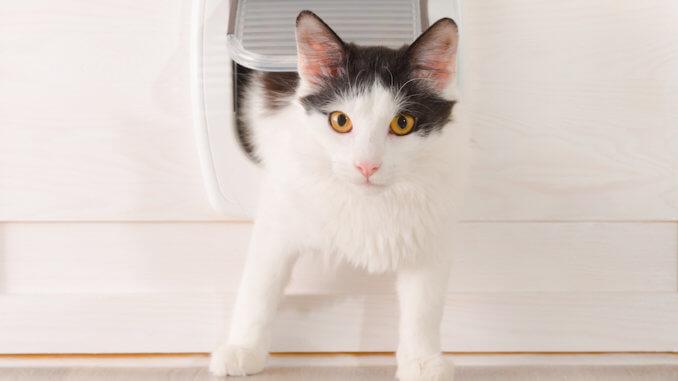 Kätzchen kommt durch eine Katzenklappe aus dem Haus