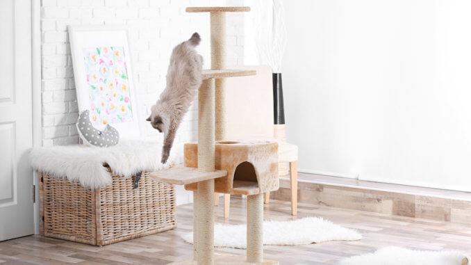 Katze auf dem Kratzbaum zu Hause