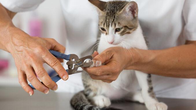 Katze bekommt die Krallen geschnitten