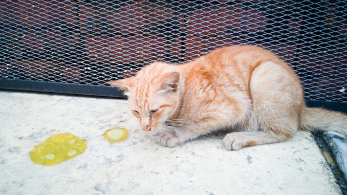 Katze erbricht gelben Schleim