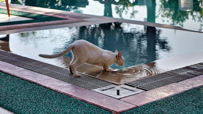 Katze am Poolrand