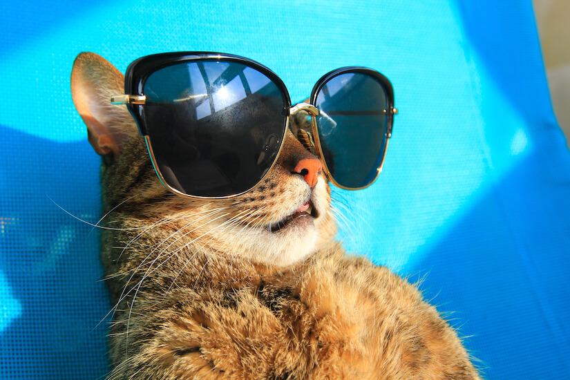 Katze im Urlaub mit Sonnenbrille auf dem Liegestuhl