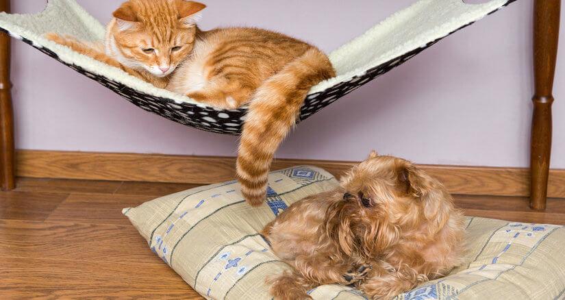 Katze in ihrer Hängematte und Hund auf der Matratze
