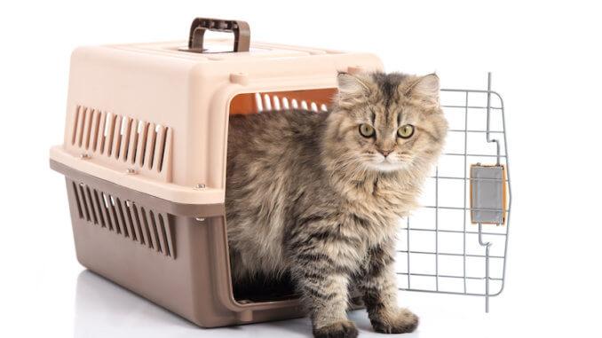 Katze in ihrer Katzentransportbox