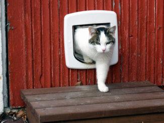 Katze kommt durch eine Katzenklappe nach draußen