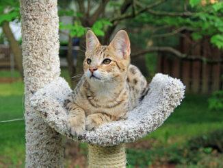 Katze liegt auf Outdoor Kratzbaum